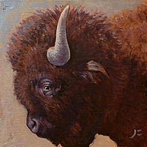 American Bison / Oil on Panel / 6 x 6 Inches ©JohnFarnsworth