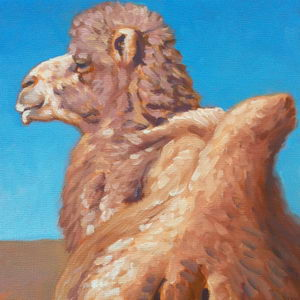 Bactrian Camel / Oil on Panel / 6 x 6 Inches ©JohnFarnsworth