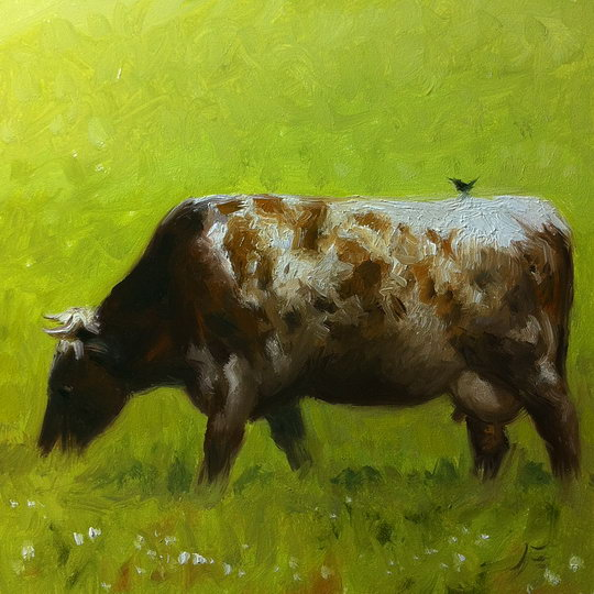 A FRENCH COW / Oil on Panel / 6 x 6 Inches / ©John Farnsworth