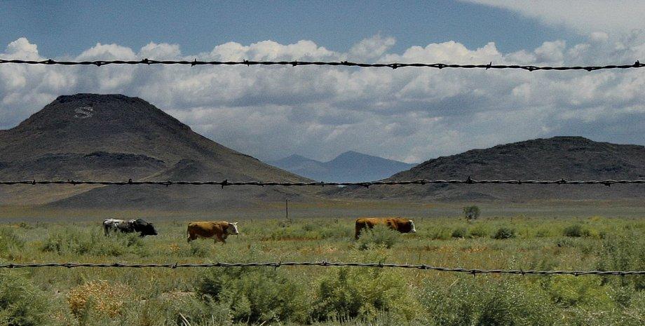 Bucking Bulls of La Jara